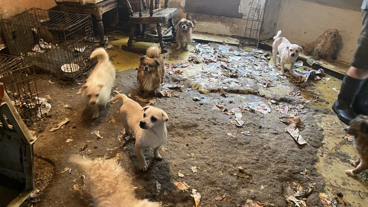 Denison Animal Welfare Group rescues 100 dogs from Whitewright home after rescuing 31 dogs...