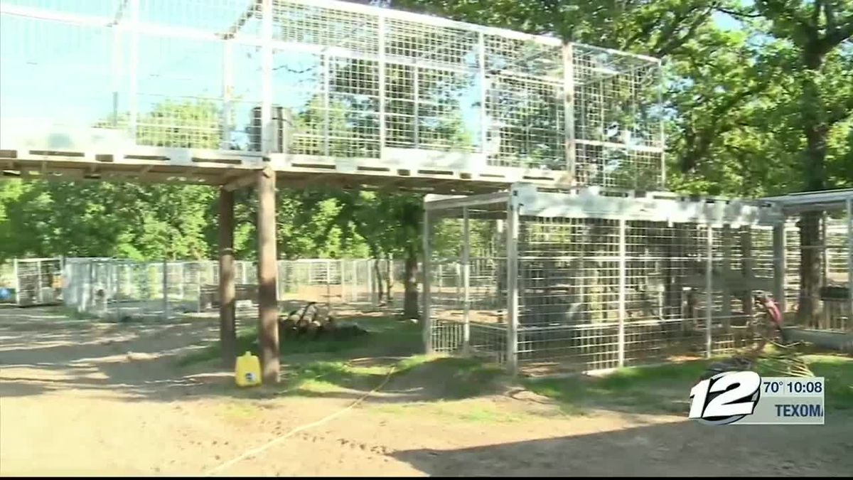 Eight adult hybrid cats were seized Thursday from Jeff Lowe's property in Thackerville, Oklahoma.