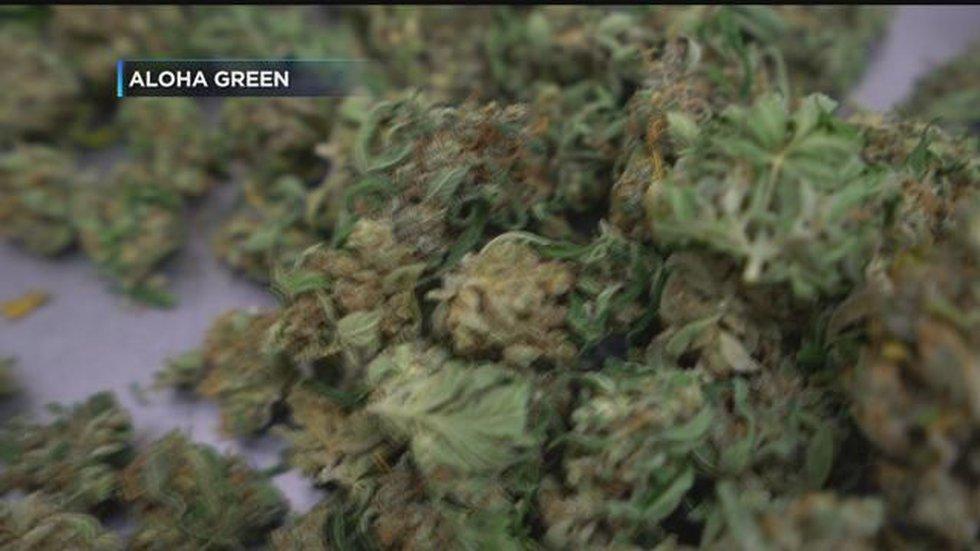 kxii.com - Kemper Ball - Illegal marijuana grow busted in Love County