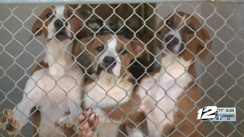 The cages at the Sherman Animal shelter aren't just full; they are over capacity.
