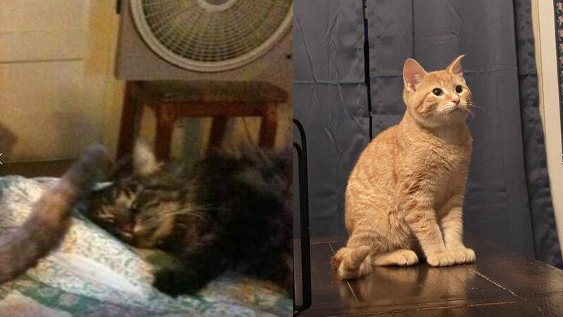 Two cats were seemingly stolen from an Ardmore neighborhood last week.