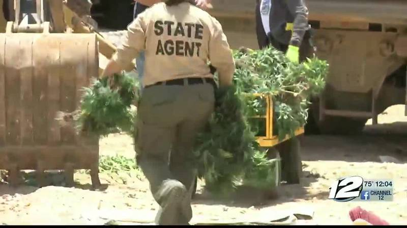 Five men facing federal charges for large-scale pot bust