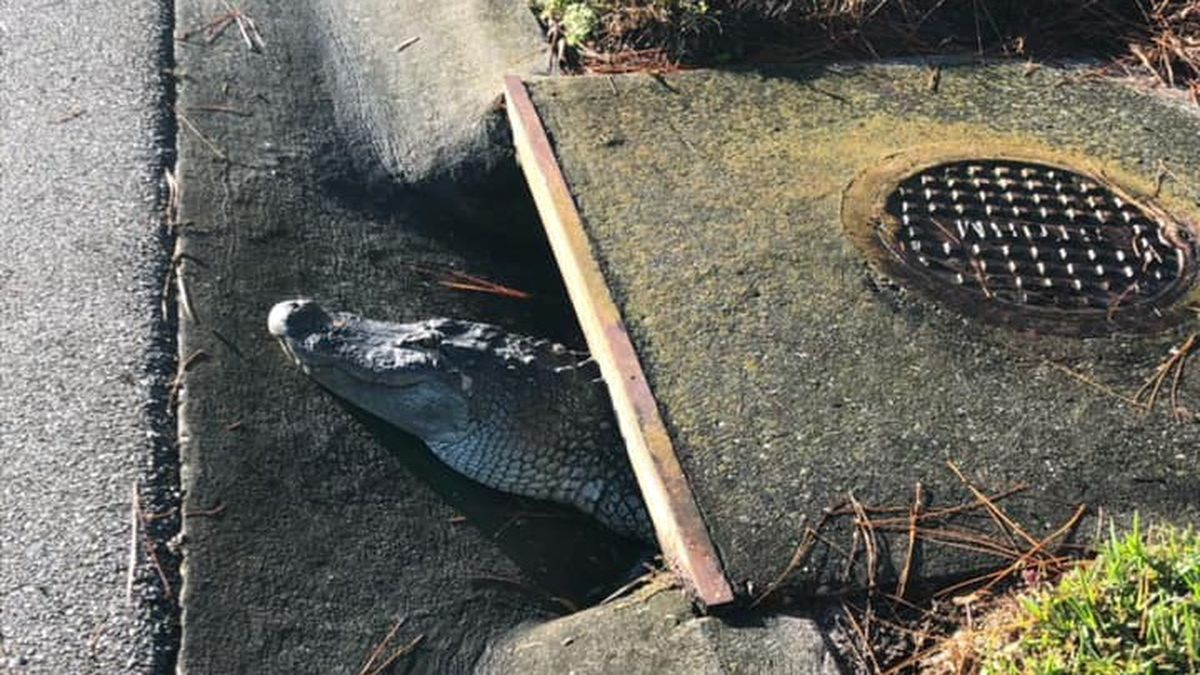The deputies lifted a concrete slab to free the scaly reptile.