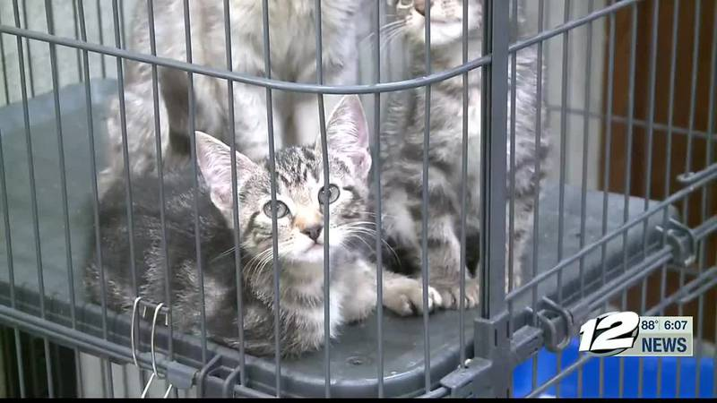 The Sherman animal shelter said they're filling up with cats and dogs alike.