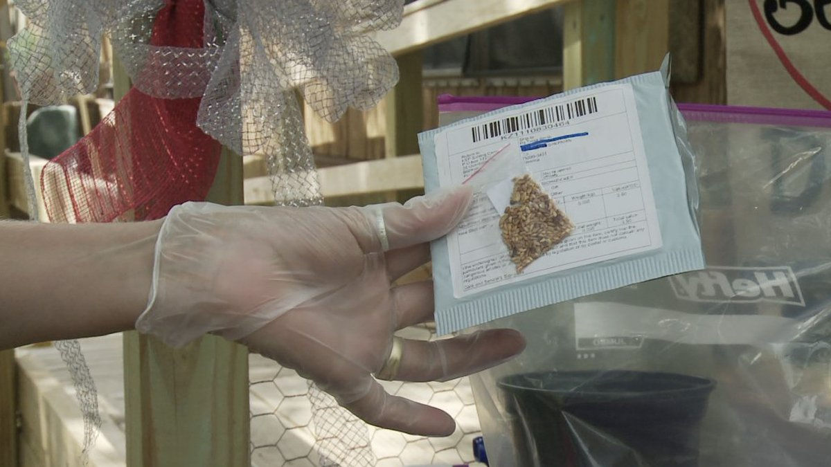A Sherman woman received seeds in a package from China that she did not order, and planted them...