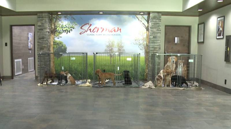 Sherman animal shelter says they're struggling to find space for dozens of dogs and cats.
