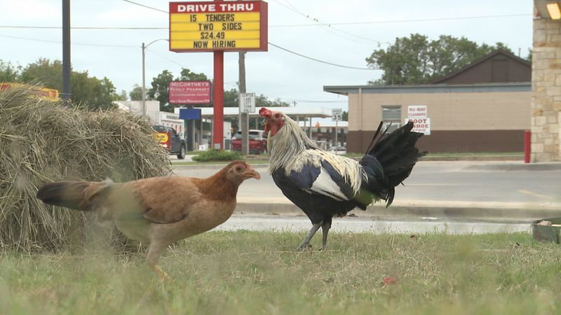 When feeling peckish in Ada, people pulling into Sonic on Mississippi Avenue can expect to be...