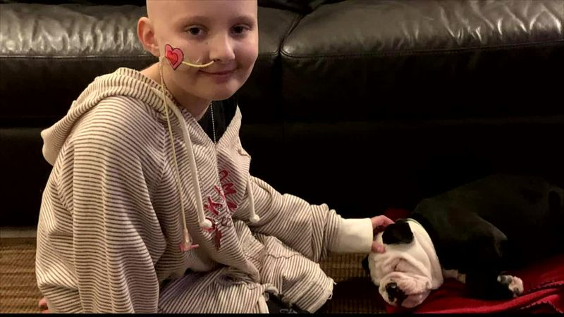 Cleft palate puppy finds his way into the arms of young girl battling cancer