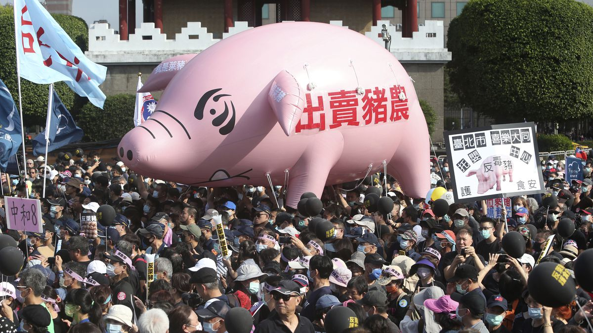 """People hold a pig model with the slogan """"Betraying pig farmers"""" during a protest in Taipei,..."""