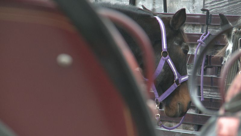 People in Ardmore can roll into the Christmas spirit by going on free carriage rides every...