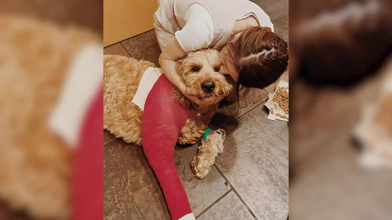 An Arizona family's dog somehow survived after jumping off a cliff and falling 200 feet.