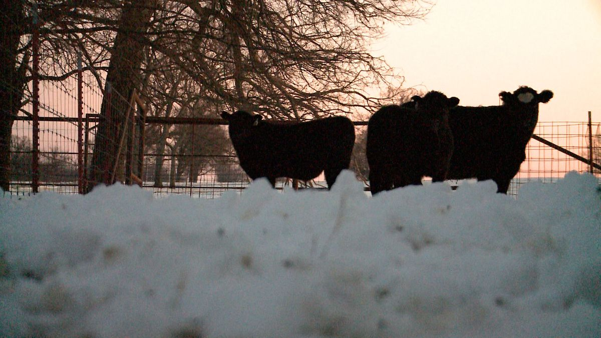 A Southern Oklahoma rancher said the subzero temperatures have cost her family more than money.