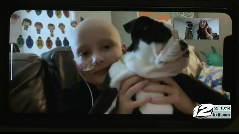 9-year-old with cancer on the road to recovery, with new puppy