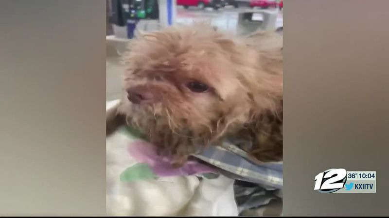An animal cruelty investigation is underway in Paris. About a week ago, Paris Animal Control...